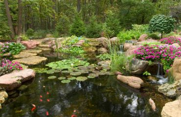 Your Pond, A Balanced Ecosystem by Aquascape