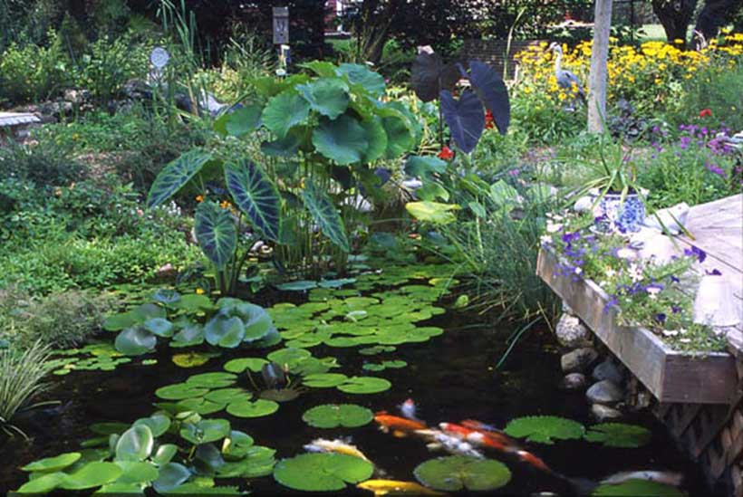 Pond supplies aquascape products live pond fish aquatic plants for Plants that live in a pond